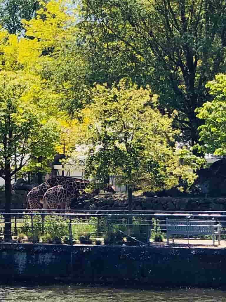 Zoo de Ámsterdam con niños